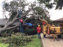 tree removal/ tree service