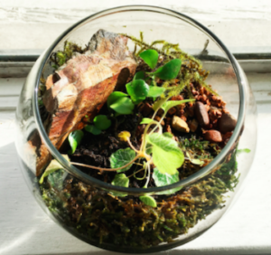 New to terrariums? Here's how you can do it yourself