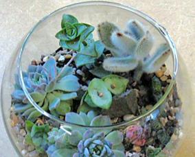 What is a terrarium?