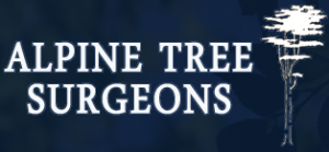 Ways to deal with Tree Surgeons all security and worldwide Tree Surgeons all arrangements