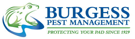 Pest Control AndBussiness Places